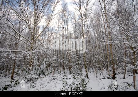 Los árboles cubiertos de nieve Kent England Reino Unido