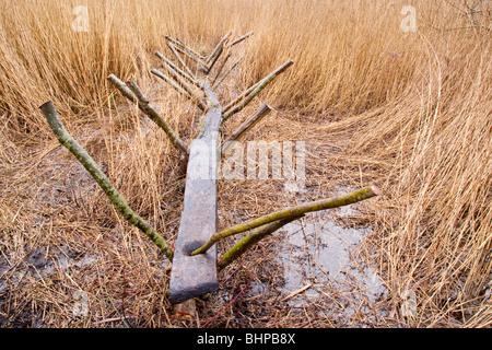 Reconstrucción de la pista dulce (un hombre hecho Neolítico camino o ruta a través de los humedales) Shapwick Heath, niveles de Somerset, Reino Unido