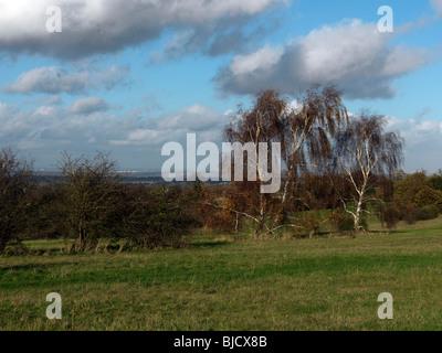 Abedul Plateado en North Downs en invierno Surrey, Inglaterra
