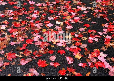 Hojas de otoño en una acera