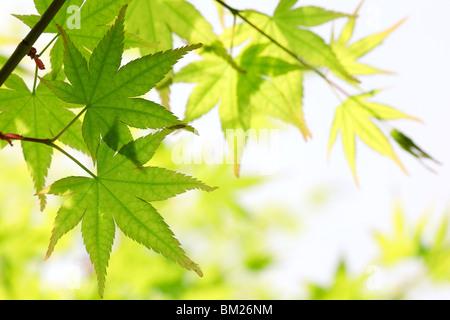 Hojas de color verde