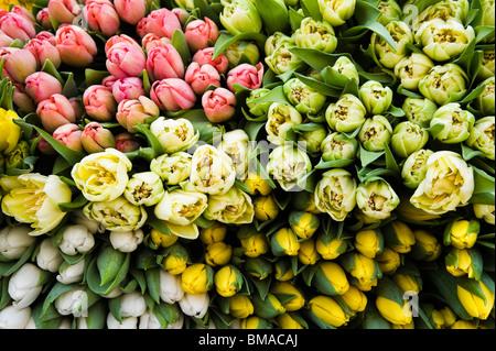 Cerca de tulipanes en el mercado Foto de stock