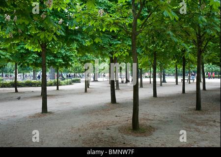 París, Jardin des Tuilleries