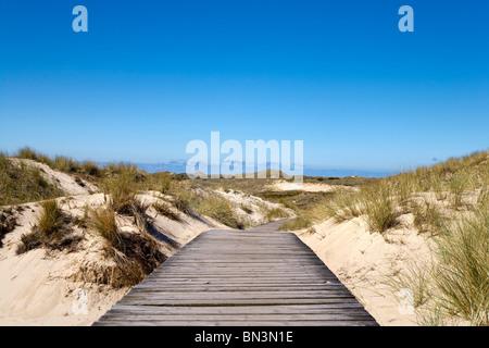 Ruta a través de madera cerca de las dunas, Norddorf isla Amrum, Alemania Foto de stock