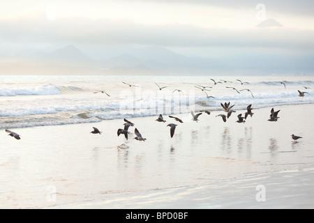 Bandada de gaviotas en la playa