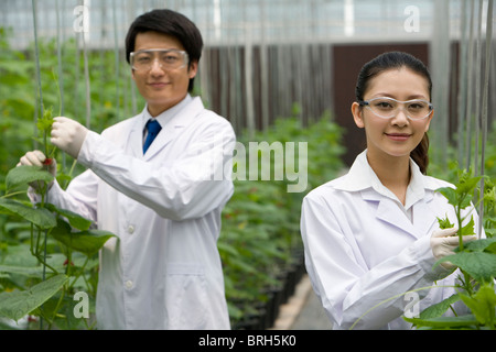 Los científicos que realizan investigaciones en finca moderna