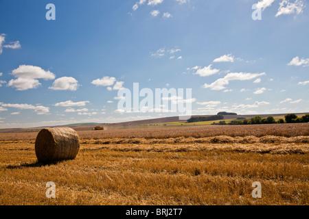 Haymaking en los campos cerca de Roundway Down, Wiltshire, Inglaterra, Reino Unido. Foto de stock