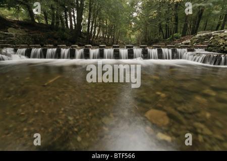 El agua que fluye entre piedras pasaderas sobre el río Shimna Tollymore, Irlanda del Norte, destacados en el Juego de Tronos