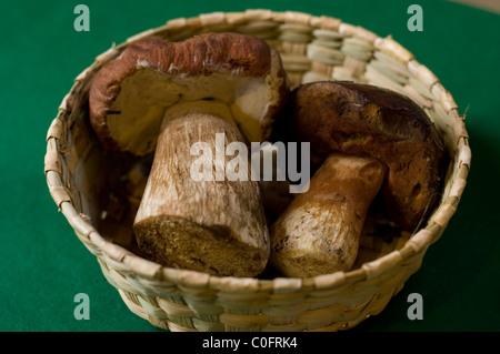 Boletus hongos en una cesta