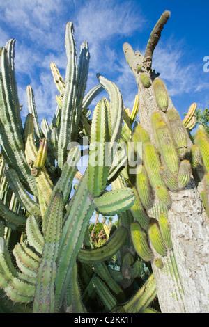 En el Jardín de Cactus jardín botánico Canario en Gran Canaria