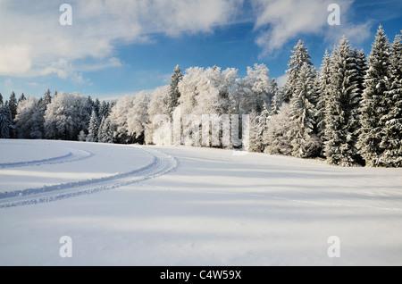 Selva Negra, Schwarzwald-Baar, Baden-Wurttemberg, Alemania