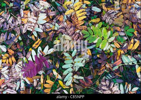 Hojas de otoño sobre el terreno.