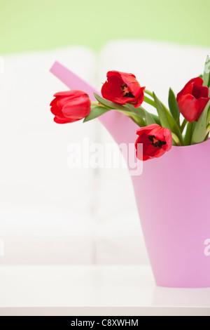Ramo de tulipanes rojos en plástico regar, Foto de estudio