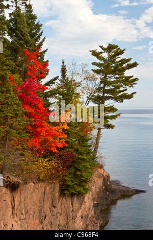 Un árbol de arce rojo brillante en la orilla norte del Lago Superior cerca de Lutsen, Minnesota, USA. Foto de stock