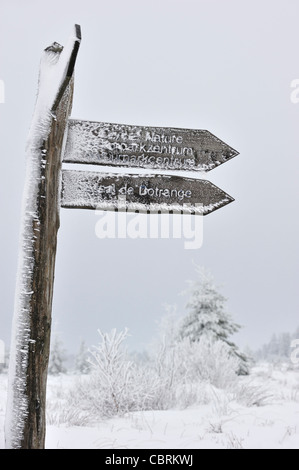 Signpost congelado cubierto de hielo en la reserva natural de alta Fens / Hautes Fagnes en la nieve en invierno, Ardenas belgas, Bélgica