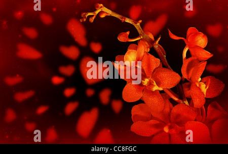 Tarjeta de San Valentín feliz, flor de orquídeas frescas rojo con corazones aislados sobre fondo negro