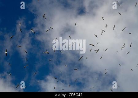 Una bandada de gaviotas volando contra el cielo