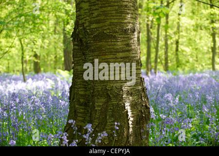 Un árbol de pie en un bosque lleno de campanillas.