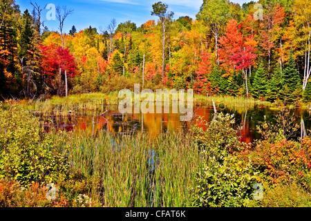 Estanque en Algonquin Park en otoño, Ontario, Canadá