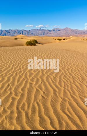 Ondulaciones de arena, Stovepipe Wells, el Parque Nacional Valle de la Muerte, California, EE.UU.