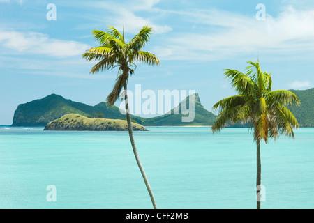 Las palmas Kentia endémica, el Mar de Tasmania, la isla de Lord Howe, Nueva Gales del Sur, Australia