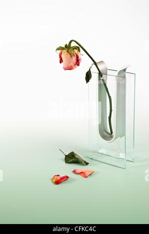 Rosa marchita en jarrón de cristal Foto de stock