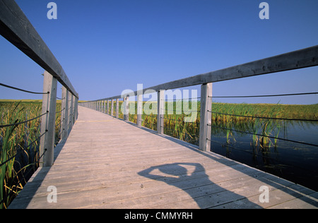 Childs sombra en Bowley estanque Boardwalk, Condado del Rey, Greenwich Prince Edward Island. Foto de stock
