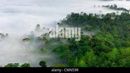 La niebla y las nubes bajas colgando sobre las tierras bajas con bosque Dipterocarp Menggaris Árbol emergente visible. El valle Danum, Sabah, Borneo