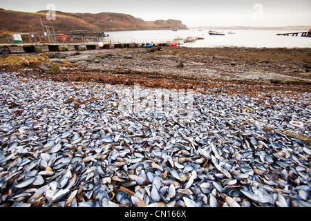 Portnalong conchas en la playa, en la Isla de Skye, Escocia, Reino Unido.