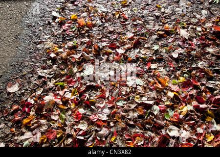 Hojas de otoño sobre la acera húmeda