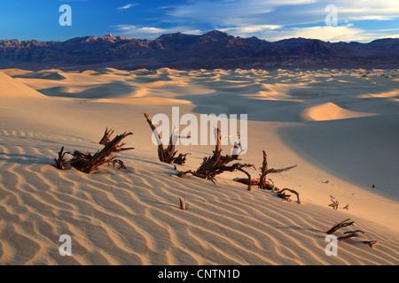 El Mesquite Apartamentos Dunas de Arena, California, Estados Unidos, el Parque Nacional Valle de la muerte