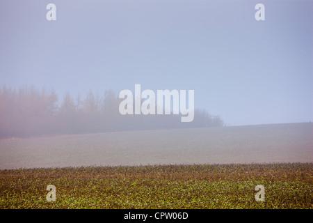 Misty escena en Barrington cerca de Burford en Cotswolds, Oxfordshire, REINO UNIDO
