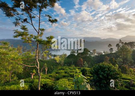 Una plantación de té cerca de Hatton, Sierra Central, Sri Lanka Foto de stock