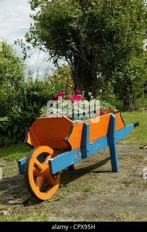 Carretilla de mano ornamentales, flores azules y naranjas carretilla de madera hecha a mano en el jardín. - Flores de color rosa y púrpura