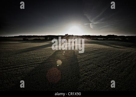 Árbol que crece en el ámbito rural Foto de stock