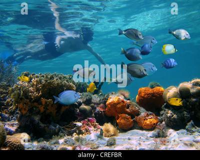 Hombre underwater snorkeling en un arrecife de coral multicolor con escuela de peces tropicales Foto de stock