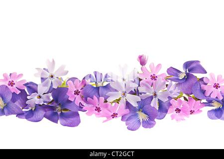 Disposición de violeta violetas y moss rosa flores aisladas sobre fondo blanco.