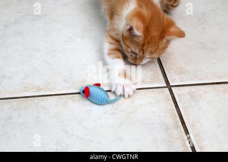 Jengibre y Blanco gatito jugando con un ratón de juguete