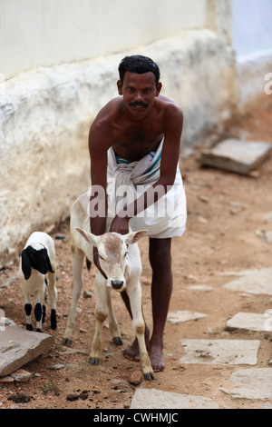 El hombre rural indio con pequeñas bullock Andhra Pradesh en el sur de la India