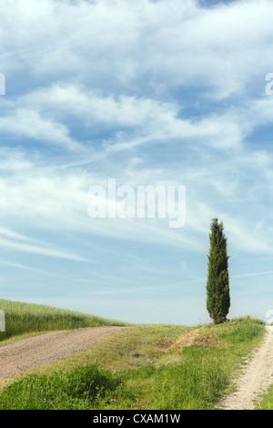 Ciprés solitario en la cima de una colina de la Toscana, cerca de Pienza en Italia Foto de stock