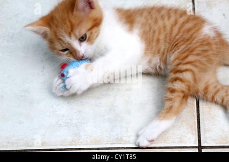 Jengibre y Blanco gatito jugando con el ratón de juguete