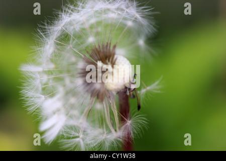 Hermosa flor macro disparó contra el fondo, photoarkive hierba exterior Foto de stock
