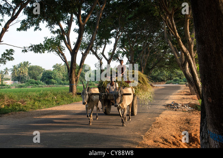 Carro de bueyes y controlador de indio, viajando a lo largo de una calle arbolada, Andhra Pradesh, India