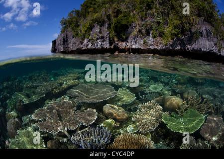 Los corales formadores de arrecifes, principalmente Acropora spp., crecen en abundancia en un plano de arrecifes poco profundos donde mucha luz solar disponible.