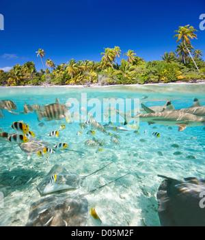 Isla tropical sobre y bajo el agua