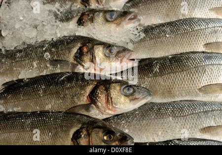 Lubina SOBRE HIELO EN EXHIBICIÓN EN UNA TIENDA DE pescaderías