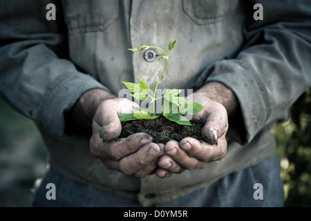 Hombre manos sosteniendo una planta joven verde