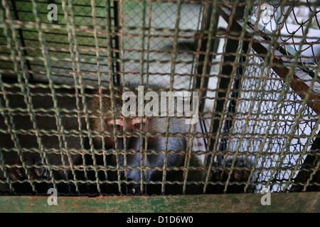 Un mono macaco en un zoológico en México.