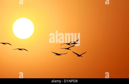 Puesta de sol con aves