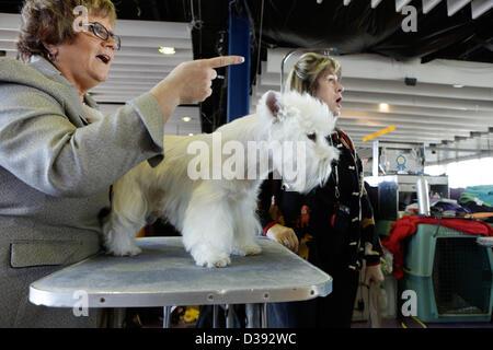 La Ciudad de Nueva York, EEUU, 12 de febrero de 2013. West Highland White Terrier Bruno con su controlador en el Foto de stock